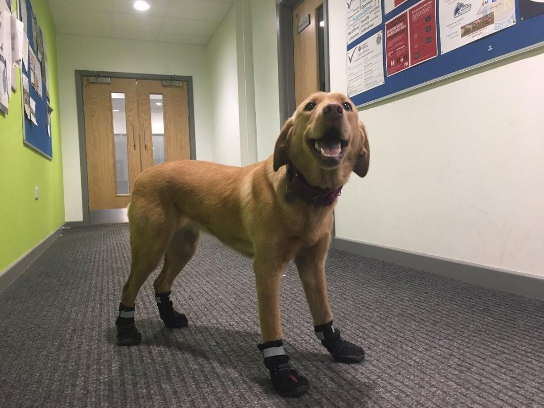 Introducing Rukka Protective Proff Dog Boots