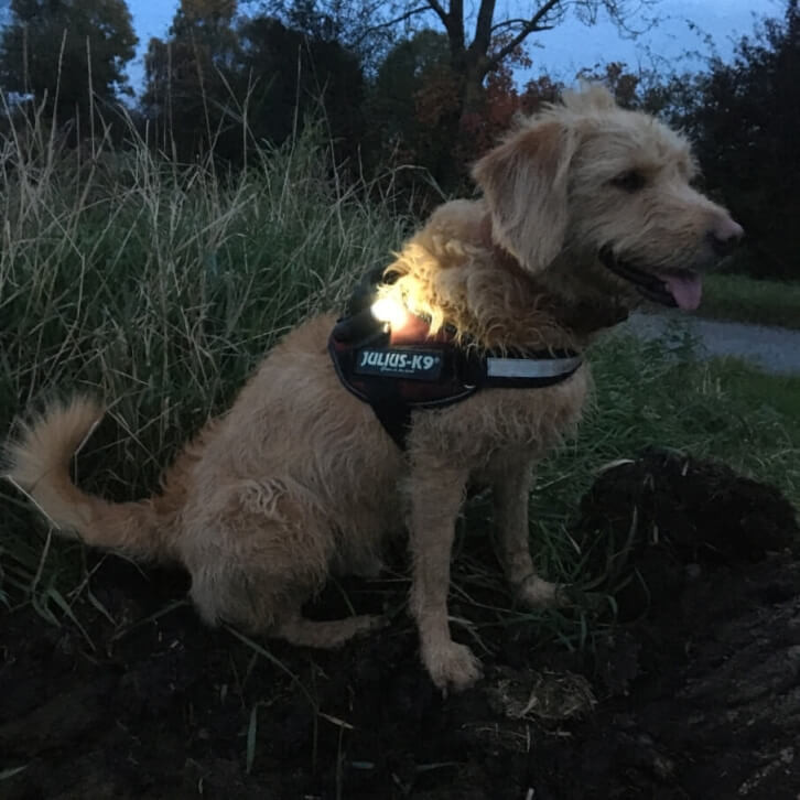 Dog Safety Lights Sale Now On!