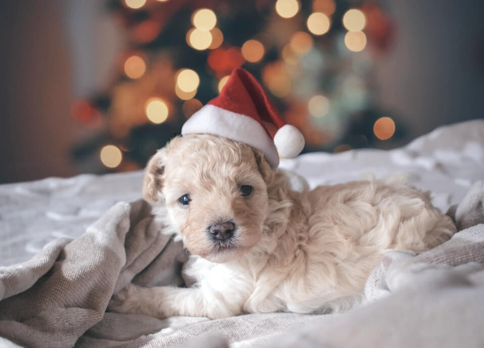 Puppies aren't just cute Christmas gifts