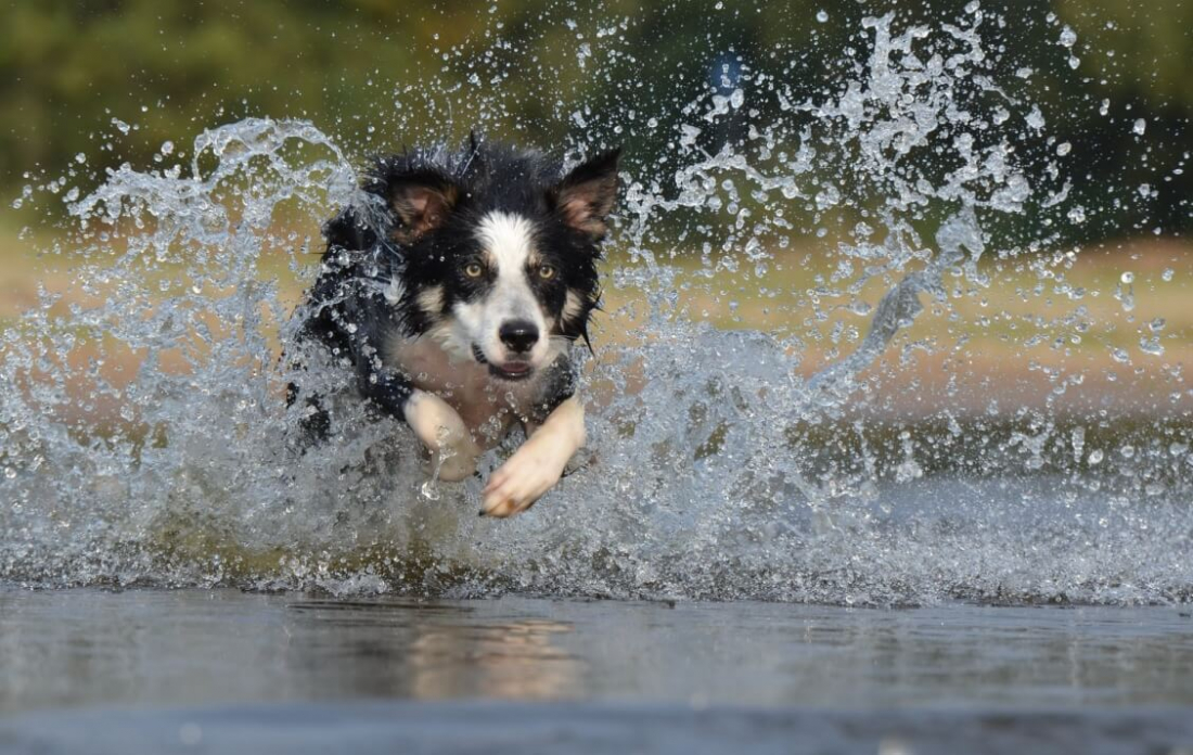 Heatstroke & Keeping Your Dog Cool In Hot Weather