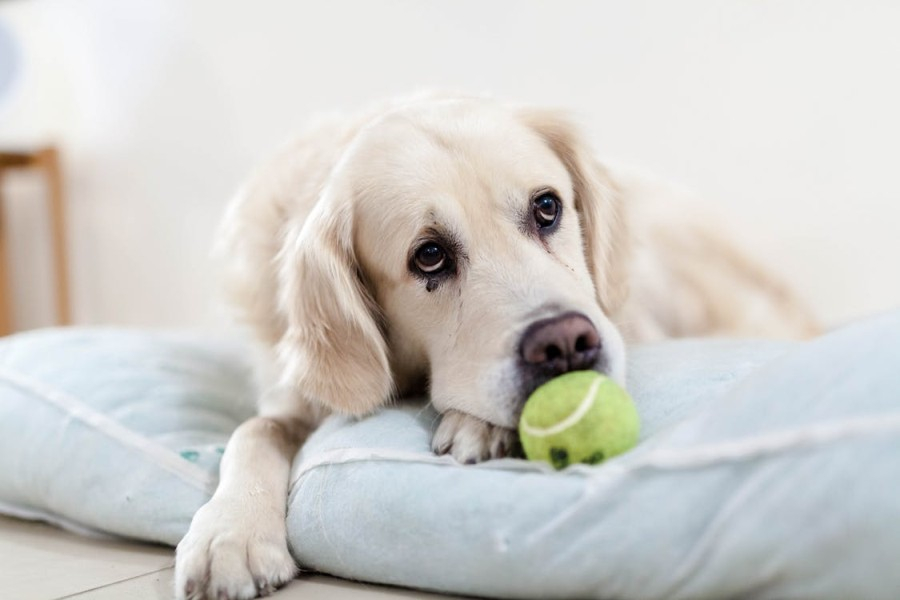 Roundworm in Dogs: What You Need to Know