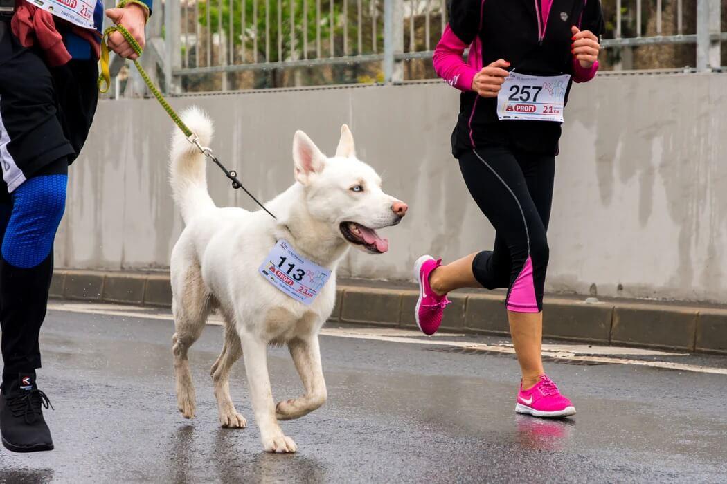 Choosing Dog Running Accessories & Equipment
