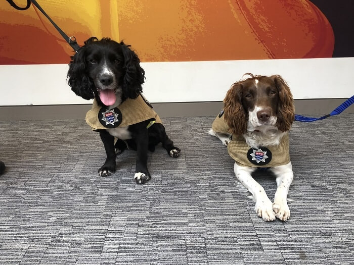 Dogs With Jobs: Fire Investigation Dogs