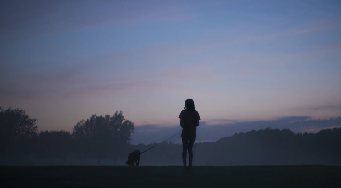 Popular Light & UV Safety For Your Dog