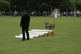 Julius K9 at the 57th National Police Dog Trials