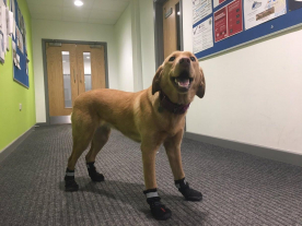 Introducing Rukka Protective Proff Dog Boots