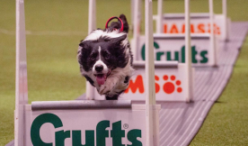 JULIUS-K9® at Crufts 2020