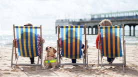 Dogs With Jobs: Guide Dogs