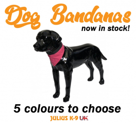 Dog Bandanas Now in Stock