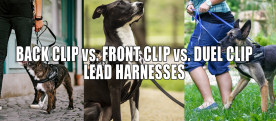 Front Clip vs. Back Clip vs. Duel Clip Dog Harnesses