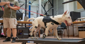 Scientific Biomechanical Study of Julius K9 Harnesses