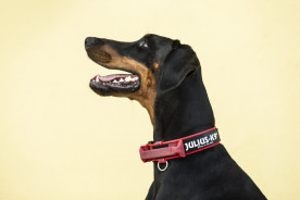 How To Measure & Fit A Dog Collar