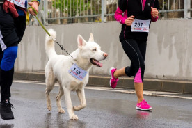 two marathon runners with their dog