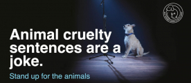 Battersea Campaign for Tougher Sentences for Animal Cruelty