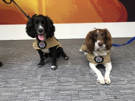 two fire investigation dogs from the london fire brigade unit