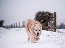 How To Keep Your Dog Safe & Warm On Winter Walks