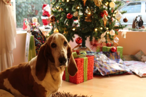 dog sat in front of Christmas tree