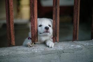 white puppy behind bars