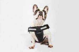 dog wearing its harness