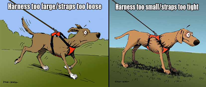 the effect of incorrect harness fittings and sizes on dogs