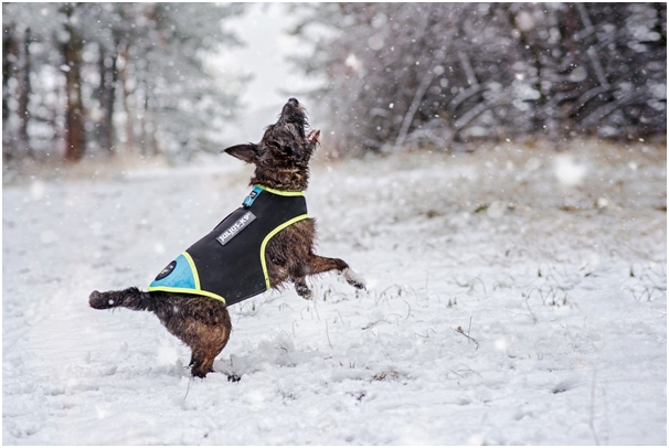 dog in snow with protective neon trim vest