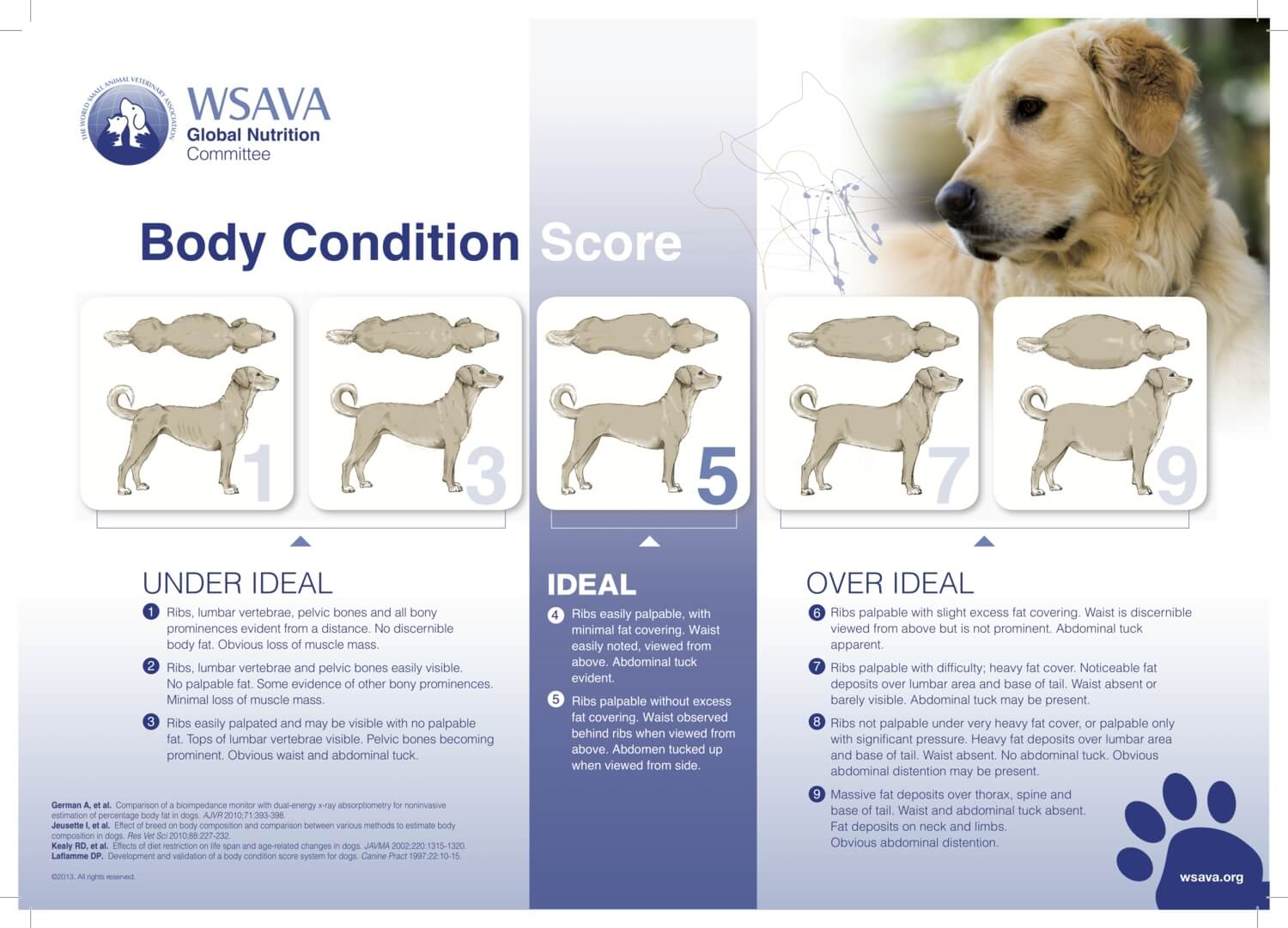 ideal weight chart guide for dogs