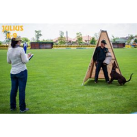 dog training tent