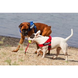 dogs at beach wearing idc belt harnesses