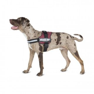 dog wearing a red Original K9® Powerharness