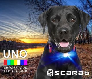 Scarab™ UNO Single Colour LED Dog Collar Light