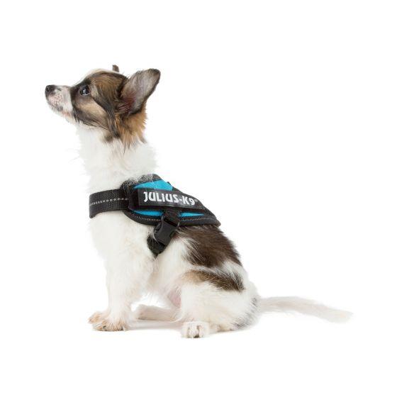 puppy wearing julius k9 IDC dog harness