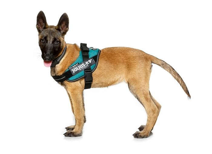The Official Idc Powerharness Julius K9 Uk