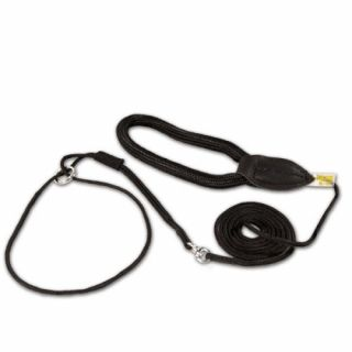 black dog show lead and collar