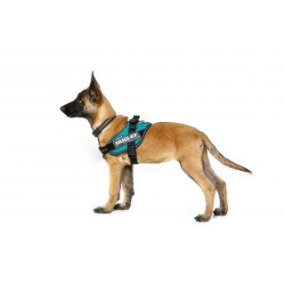 side view of dog wearing IDC® Powerharness