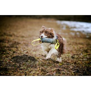 dog running with tug toy in mouth