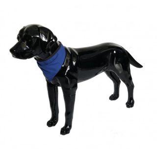 Blue Dog Bandana Medium