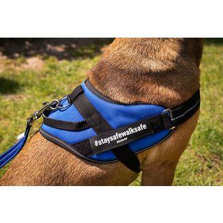 dog wearing blue IDC comfort harness