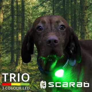 dog wearing the TRIO LED dog collar at night