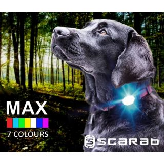 dog in woods wearing Scarab MAX LED collar light