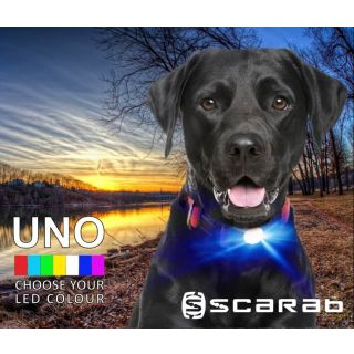dog by river wearing Scarab UNO LED dog collar light
