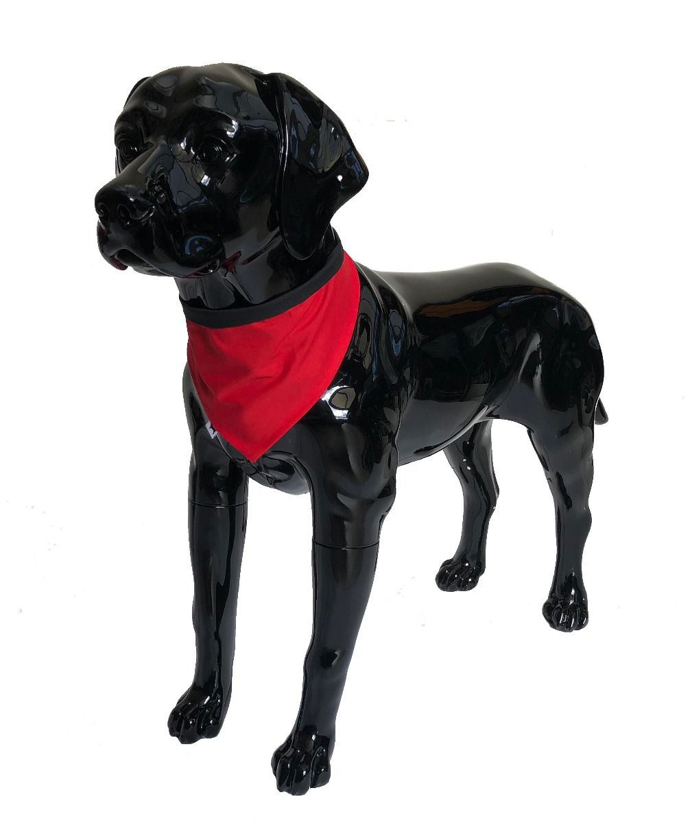 julius k9 dog bandana promo shot