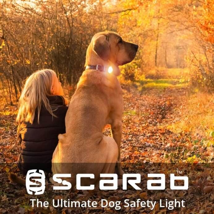 dog on woodland path with young girl wearing a Scarab dog collar light