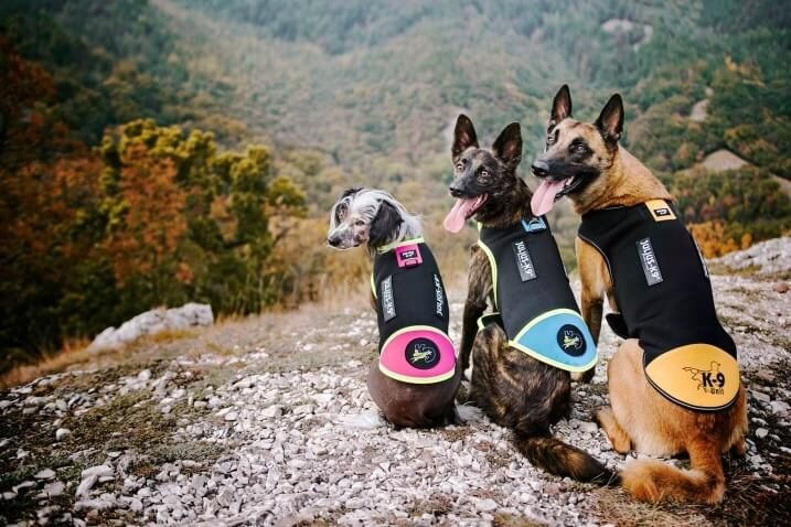 three dogs on cliff side wearing IDC all weather vests