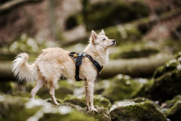 idc longwalk harness used during a hike