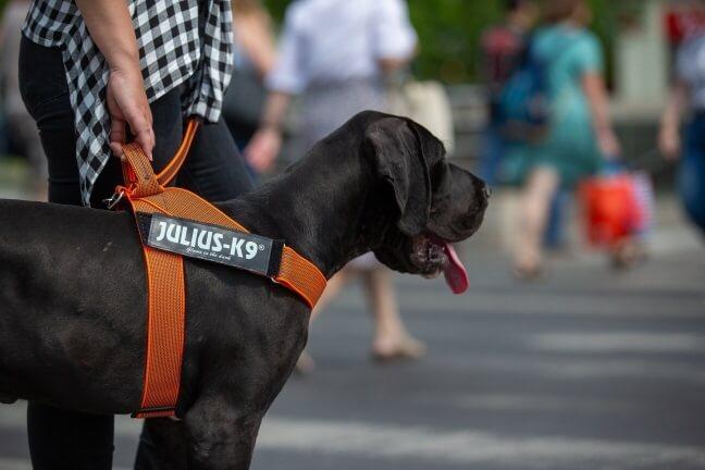 orange idc belt harness worn in city