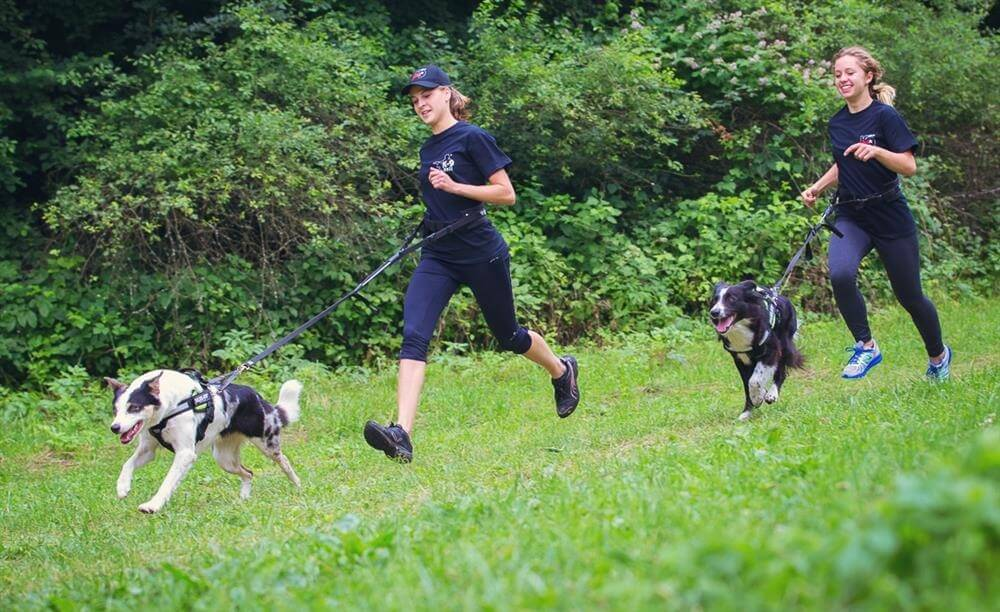 two runners jogging with their dogs on a leash
