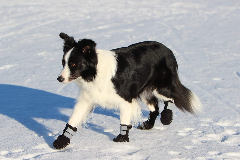 dog walking in snow wearing rukka dog boots