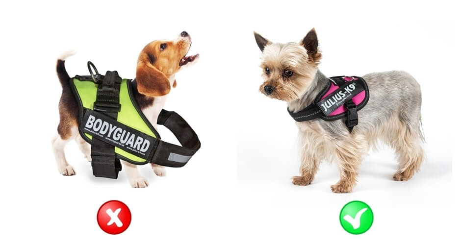 diagram of a harness that's too big and too small for the dog