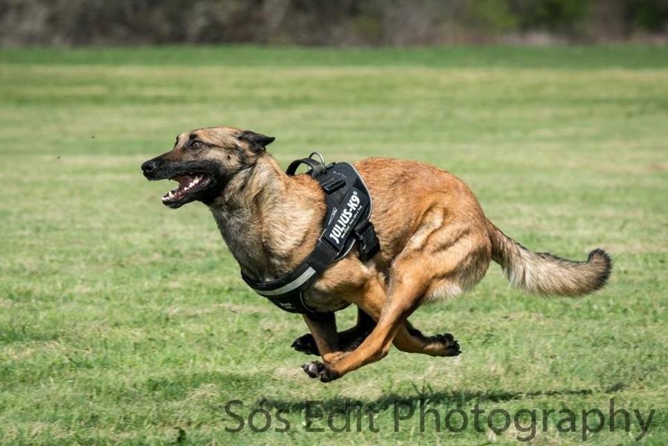 Maya on training tredmil