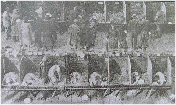 crufts 1891